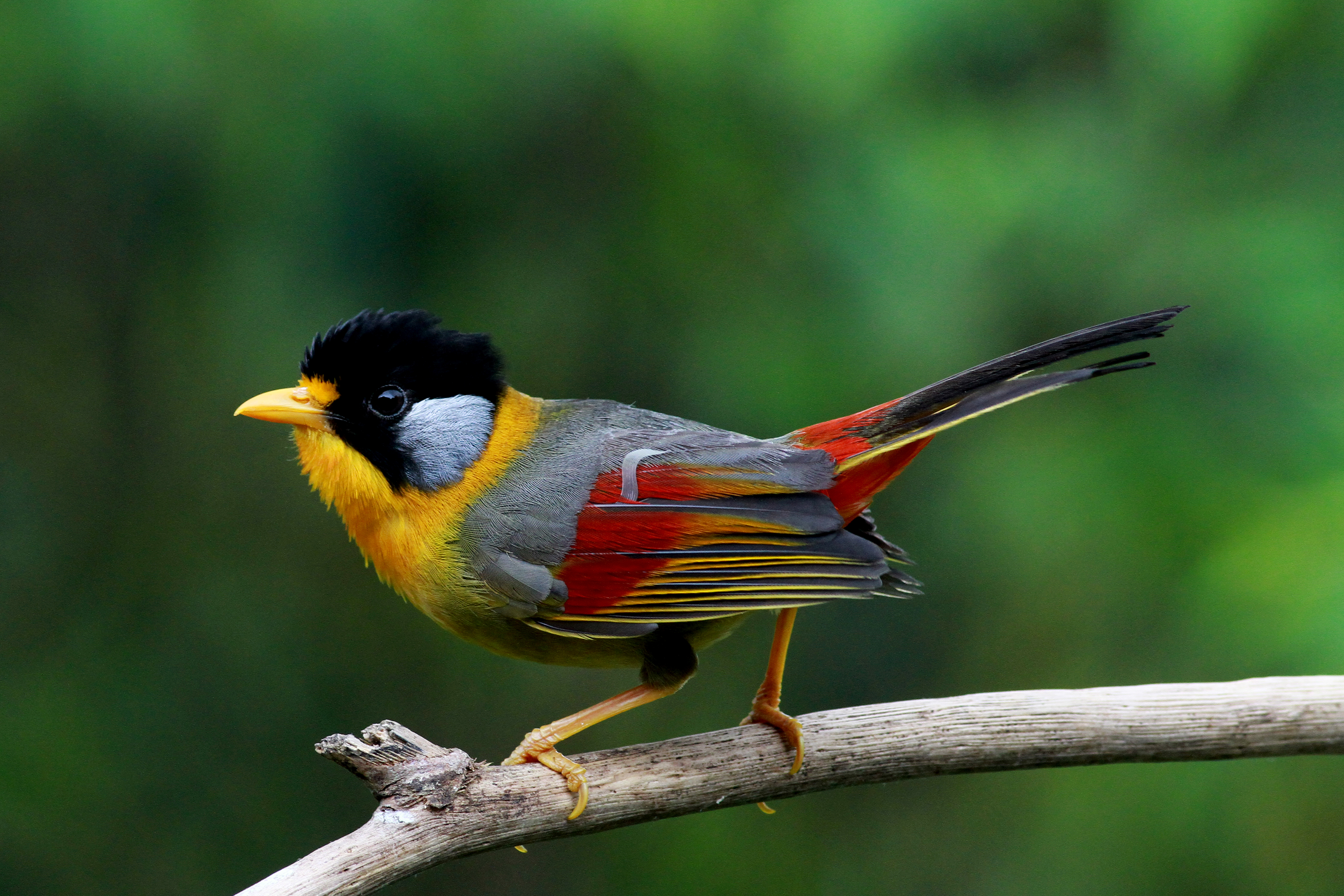Information portals about birds: a selection of sites